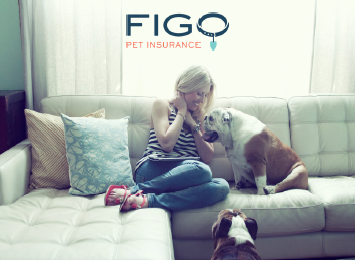 Picture from Pet Health Insurance in Ormond Beach and Palm Coast, FL